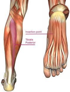 Aches and pains in the heel, or in the bottom of the foot, can be very challenging. It can stop the best of us from walking, running, or playing sports. Plantar - pertaining to the bottom of the foot. Fasciitis - inflammation of the fascia. Myofascial release refers to the manual massage technique for stretching the fascia and releasing bonds between fascia, integument, and muscles with the goal of eliminating pain, increasing range of motion and equilibrioception.