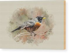 American Robin - Watercolor Art Acrylic Print by Christina Rollo. All acrylic prints are professionally printed, packaged, and shipped within 3 - 4 business days and delivered ready-to-hang on your wall. Choose from multiple sizes and mounting options. Canvas Art Prints, Fine Art Prints, Robin Bird Tattoos, Country Wall Art, Country Decor, Horizontal Wall Art, American Robin, Thing 1, Watercolor Bird