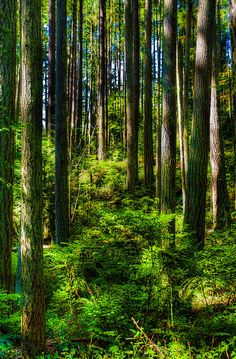 Forest Photograph by Tommy Farnsworth - Forest Fine Art Prints and Posters for Sale