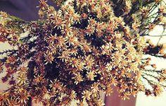 Mademoiselle Cosmopolite: Cette semaine, dans mon pot Mason: Fleurs d'automne Pot Mason, Mason Jars, Pots, Mademoiselle, How To Dry Basil, Herbs, Mason Jar, Herb, Cookware