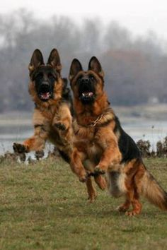Here we come to save the day-GSD