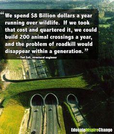 We spend $8 billion dollars a year running over wildlife | Anonymous ART of Revolution