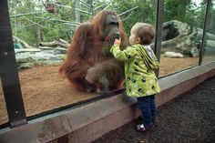 San diego zoo coupons -- best price http://www.pinterest.com/TakeCouponss/san-diego-zoo-coupons/
