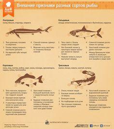 Внешние признаки разных сортов рыбы