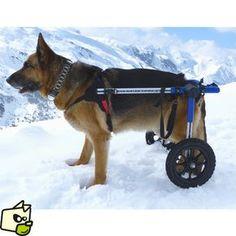 chariot CANIS CART LIBERTY pour animaux handicapés