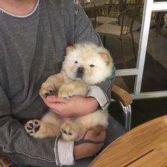 Dogs And Puppies Pets So Cute Super Ideas - Welpen Cute Baby Animals, Animals And Pets, Funny Animals, Cute Puppies, Cute Dogs, Dogs And Puppies, Doggies, Shiba Inu, Tier Fotos