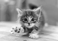 Art On Sun: ♥ cat ♥