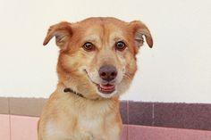 Toby, después de vivir 5 años con una familia lo entregan al zoosanitario.