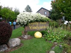 Bully Hill Vineyards, Keuka Lake, New York (NY) | Explore bo… | Flickr - Photo Sharing! Finger Lakes Wineries, Upstate New York, Wine Country, Places Ive Been, Vineyard, Have Fun, Explore, Photos, Pictures
