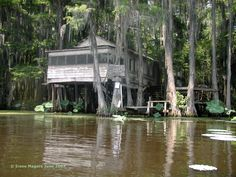 Caddo Lake, Tx.   Very cool. Watch out for Gators!