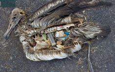 Fish Eat Plastic from Polluted Oceans, Travels up Food Chain