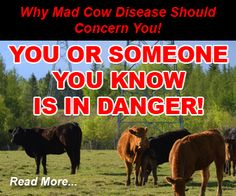 the media and mad cow disease essay Mad cow disease essays: over 180,000 mad cow disease essays, mad cow disease term papers, mad cow disease research paper, book reports 184 990 essays, term and.