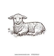 Lamb farm animal sketch, isolated lamb mammal on the white background. Animal Sketches, Drawing Sketches, Animal Drawings, Pencil Drawings, Lamb Drawing, Lamb Tattoo, Sheep Illustration, Animal Body Parts, Nativity Silhouette
