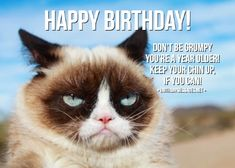 Funny Birthday Wishes & Birthday Quotes: Funny Birthday Messages Grumpy Cat Birthday, Funny Birthday Message, Happy Birthday Wishes Messages, Birthday Wishes For Friend, Birthday Poems, Birthday Wishes Quotes, Birthday Funnies, Birthday Cards, Funny Grumpy Cat Memes