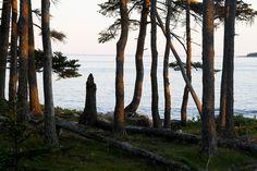 mount desert island, maine | reading my tea leaves