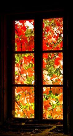 lovely fall window....