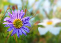 Wiesenblume im September - Jahreszeiten - Galerie - Community
