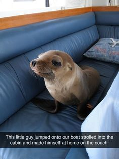 OMG! THIS IS THE CUTEST THING I HAVE EVER SEEN!! I'm getting a boat and driving it to wherever baby seals live!