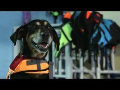 Lucky Dog- The Basics of Paddleboarding