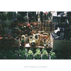 비 오늘 생각나는 오후의 따사로운 햇살...  #contax #t2 #snap #photo #사진 #감성사진 #일상 #daily #film #filmcamera #35mm #analog #필름스타그램 #photoholic #filmholic #김군