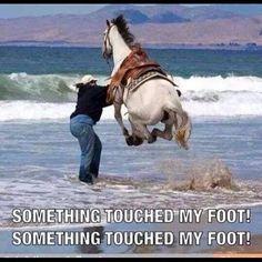 Why we don't bring the horse to the beach,  #orangebeach #orangebeachcondo