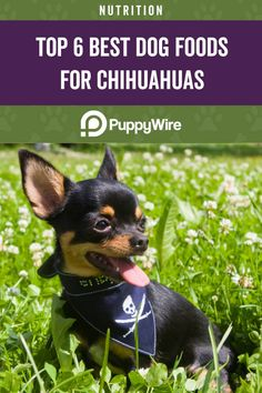 Top 6 Best Dog Foods for Chihuahuas Best Dog Food, Dry Dog Food, Best Dogs, Chihuahua Dogs, Chihuahuas, Puppies, Tiny Dog Breeds, Small Breed, Hills Science Diet