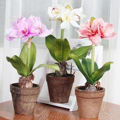 Маленькая хитрость: чтобы цветы в доме цвели пышно и долго! - Дом, квартира, дача, огород, уют и быт