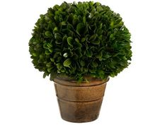 Silk Plants Direct Preserved Boxwood Ball Topiary Pack of 2 *** Read more  at the image link.