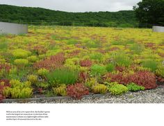 sedum green roof - Google Search