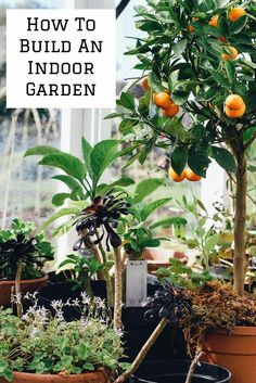 5 Ways You Can Build a Garden Inside Your House