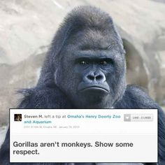 Gorillas | 19 Highly Important Zoo Animal Reviews