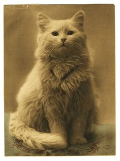 1880-1890 Cat with bell. This Victorian cat portrait done in relief half-tone and with applied color.