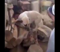 """""""O Grito do Bicho"""": Flagrante de homem estuprando uma cadela"""