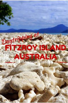 See the sights around the beautiful Fitzroy Island, Great Barrier Reef, Australia - See the adventure at www.theworldisabook.com
