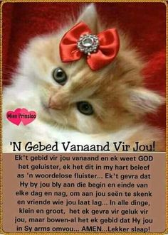 ń Gebed vir jou vanaand. Good Night Quotes, Good Morning Good Night, Evening Greetings, Evening Quotes, Messages For Friends, Good Night Blessings, Goeie Nag, Goeie More, Afrikaans Quotes
