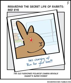 Get the red out. Funny Bunnies, Baby Bunnies, Secret Life Of Rabbits, Bunny Quotes, Baby Animals, Cute Animals, Bunny Rabbit, Dutch Rabbit, Bunny Care