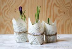 spring flower decoration: early bloomer, crocus in glas jar wrapped with string and old book pages // Frühlingsdekoration: Frühblüher, Krokusse in Gläsern umwickelt mit alten Buchseiten und Paketschnur