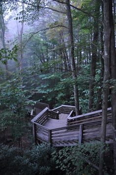Foggy Morning in New River Gorge | West Virginia (by Scott Cochran)