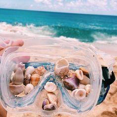 Seashells in swimming goggles – beach aesthetic tropical swiming shells beachy SummertimesVibes MyVibes HomeVibes 386887424239535662