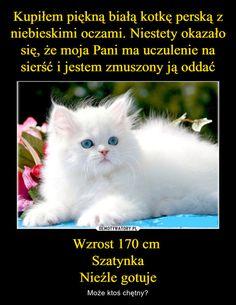 Kupiłem piękną białą kotkę perską z niebieskimi oczami. Niestety okazało się, że moja Pani ma uczulenie na sierść i jestem zmuszony ją oddać Wzrost 170 cm Szatynka Nieźle gotuje