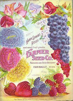 Farmer Seed Co  -Kathy H