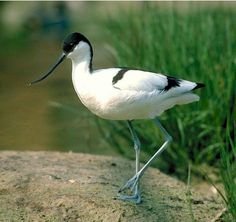 Gulipán fényképe Storks, Herons, Animals, Animales, Animaux, Animal Memes, Animal, Animais, Dieren