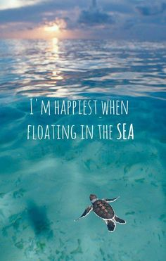 Floating in the sea...