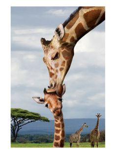 .Such a Sweet Picture Of Mom and Her Baby........