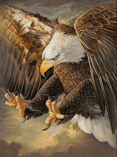 The Eagles, Eagle Images, Eagle Pictures, Native Art, Native American Art, Beautiful Birds, Animals Beautiful, Aigle Animal, Eagle Wallpaper