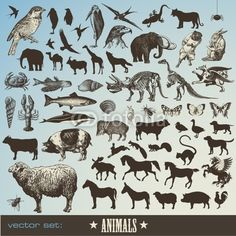 Vector: set of 60 detailed animal illustrations and  animal silhouettes #vector #download #image #royalty #free #printable #scrap #scrapbook #scrapbooking #diy #paper #graphic #old #illustration #vintage #retro #antique #decorative #decor #decoration #page #book #design #ornament #ornate #woodcut #engraving #engraved #etching #print #element #ephemera #ancient