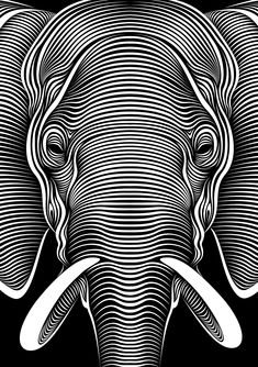 Elephant : Faces lll by Patrick Seymour on Behance