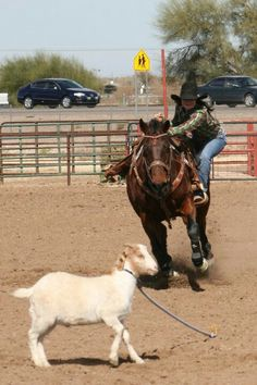Rodeo - another goat tying get off