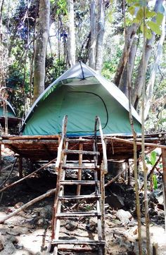 RainForest Camping Perhentian Island, Pulau Perhentian Kecil: See 20 traveler reviews, 92 candid photos, and great deals for RainForest Camping Perhentian Island, ranked #1 of 12 specialty lodging in Pulau Perhentian Kecil and rated 5 of 5 at TripAdvisor.