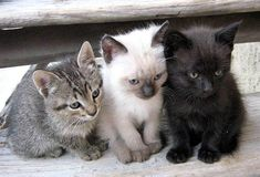 Beautiful Gray Cat Bus Cartoon Plush Coin Wallets Cute Jiji Cat Pet Jiji Black Cat Purse Mobile Phone Bag Drawstring Pocket Plush Bag Driving A Roaring Trade Costumes & Accessories